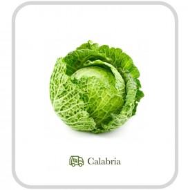 Cavolo Verza - 1 pz (ca. 1 kg)