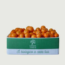 Box Monoprodotto Clementine 10 kg