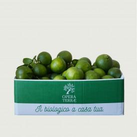 Box Bergamotto 10 kg