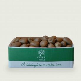 Box Kiwi Verde 5 kg