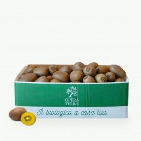 Box Kiwi Giallo 5 kg
