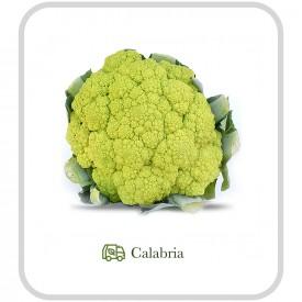 Cavolo Verde - 1 pz (ca. 1 kg)